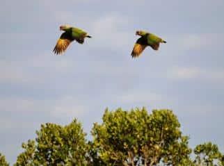 Revoada dos pássaros - Ilha Pinheiro e Pinheirinho