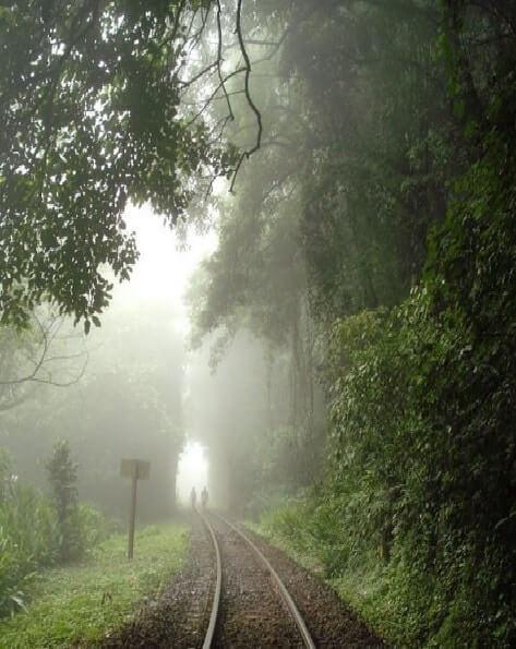 Caminho do Itupava -Serra do Mar/PR