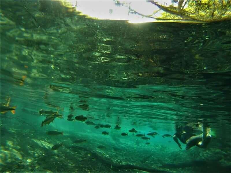 Flutuação em Bonito - Aquário Natural